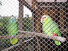 vogelpark_01.jpg